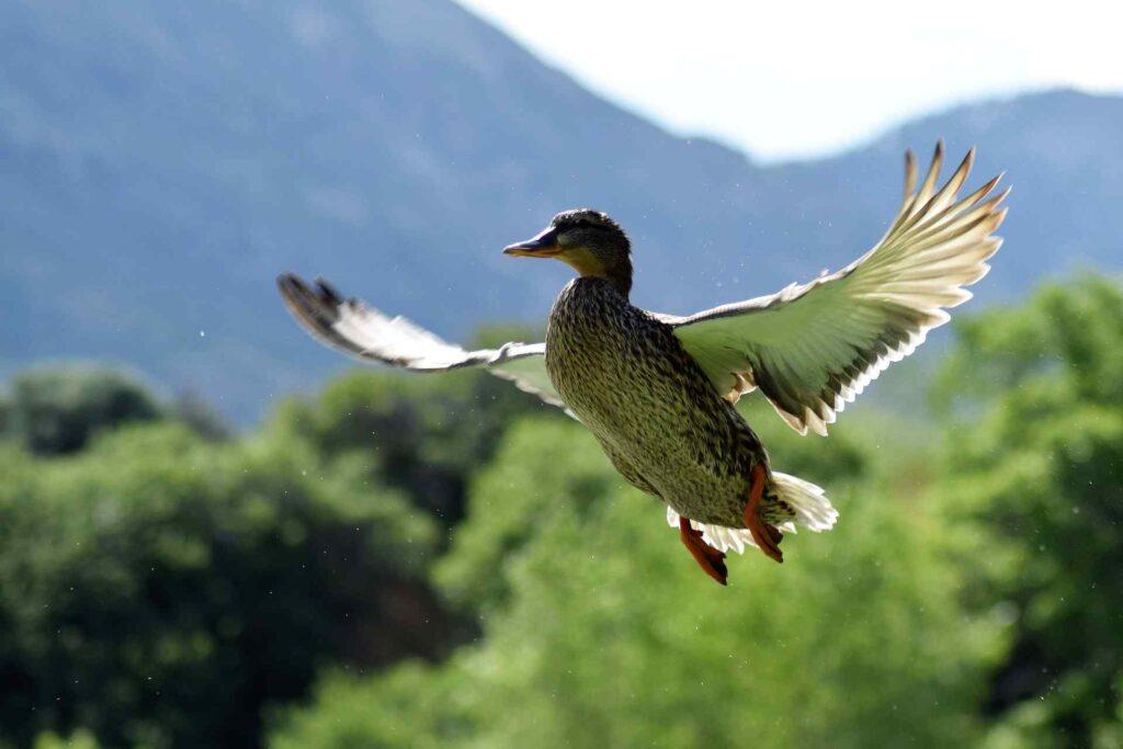 Best duck hunting Binoculars