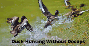 duck hunting without decoys