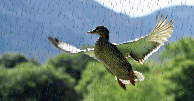 Duck hunting in the rain