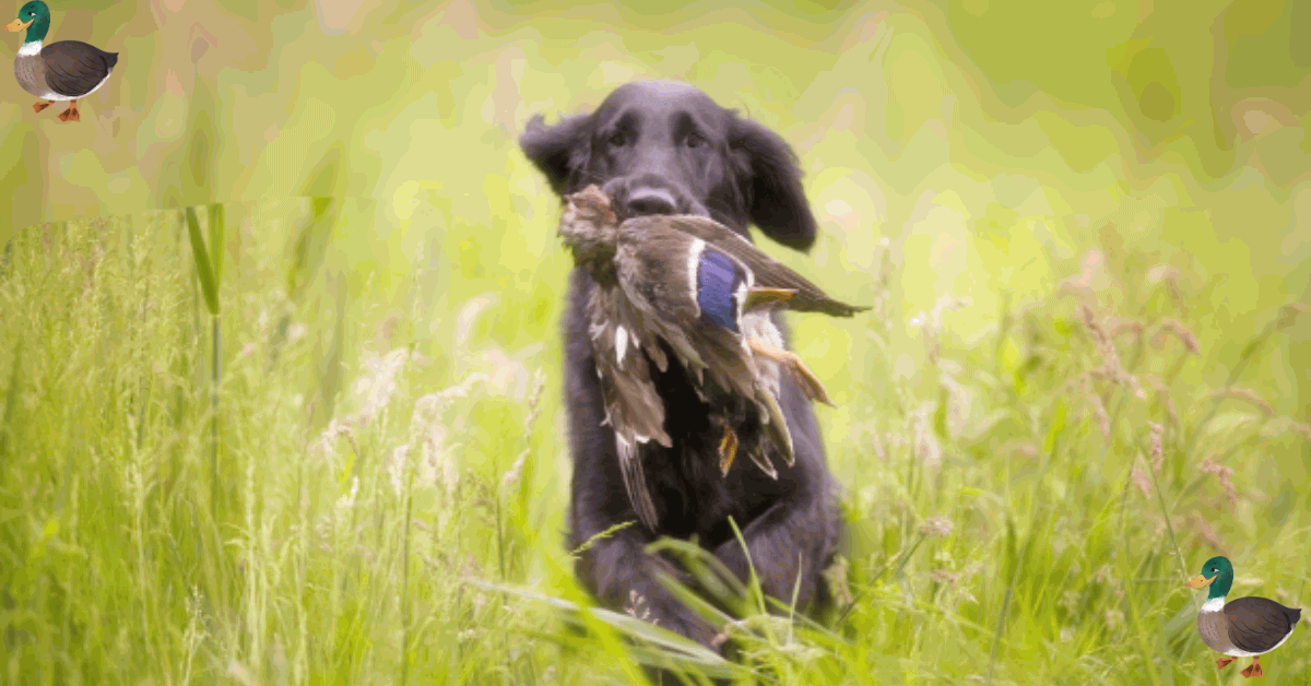 How To Duck Hunt Without A Dog