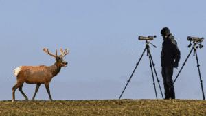 best spotting scope for elk hunting