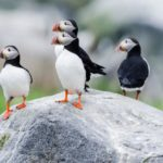 Advice: Binoculars for Puffin, Whale & Seal Watching